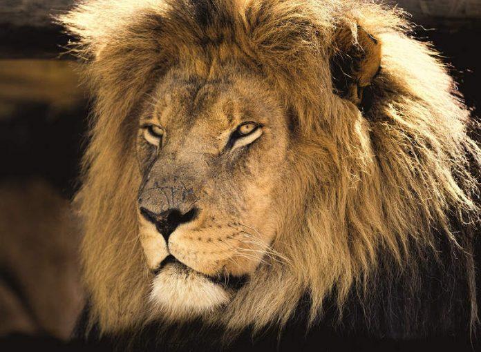 il re leone - esterno